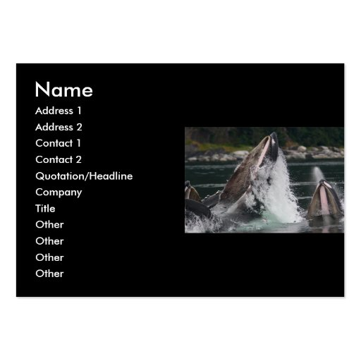 profile or business card, whales