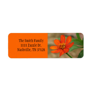 Profusión anaranjada del Zinnia Etiqueta De Remitente
