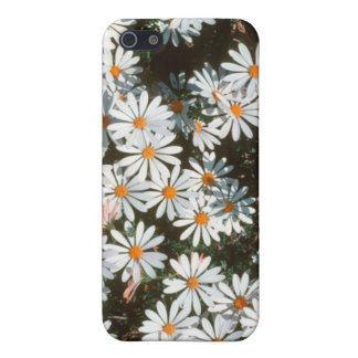 Profusion Of White Daises (Asteraceae) iPhone 5 Covers