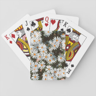Profusion Of White Daises (Asteraceae) Card Deck