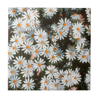 Profusion Of White Daises (Asteraceae) Small Square Tile