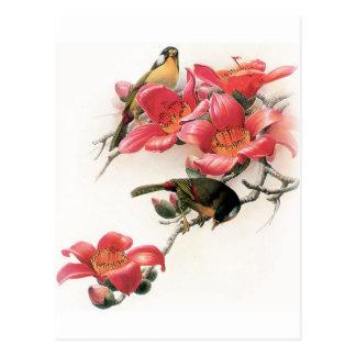 Profusión rosada tarjeta postal