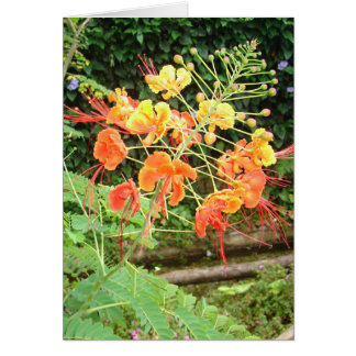 Profusion Stationery Note Card