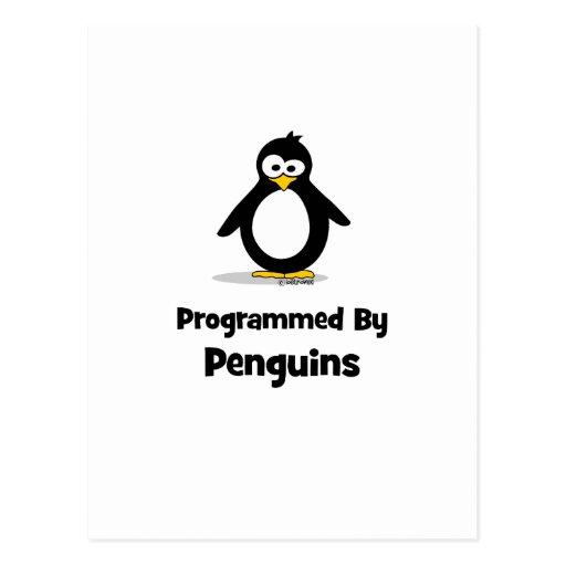 Programmed By Penguins Postcard