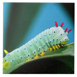Prometheus Moth Caterpillar, Callosamia Ceramic Tile