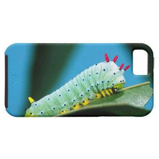 Prometheus Moth Caterpillar, Callosamia iPhone SE/5/5s Case