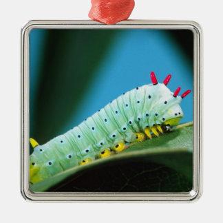 Prometheus Moth Caterpillar, Callosamia Metal Ornament