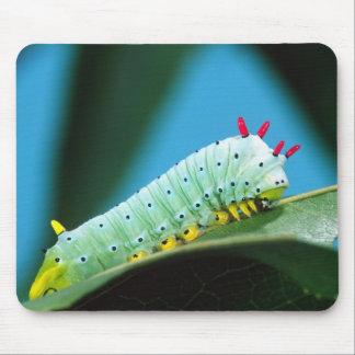 Prometheus Moth Caterpillar, Callosamia Mouse Pad