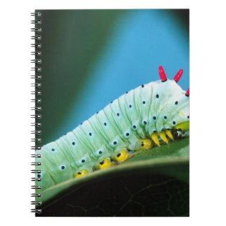 Prometheus Moth Caterpillar, Callosamia Notebook