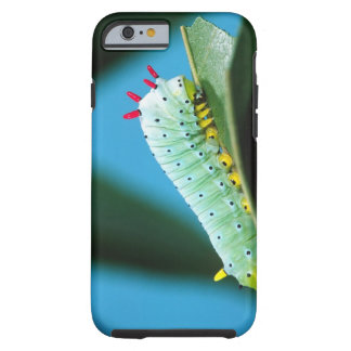 Prometheus Moth Caterpillar, Callosamia Tough iPhone 6 Case