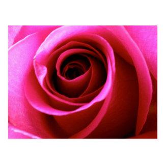 Promise Rose Postcard