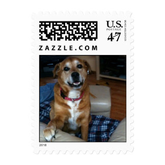 Promote pet adoption - this Lucky guy was saved Postage