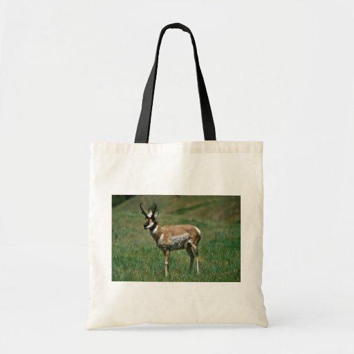 Pronghorn Antelope Bag