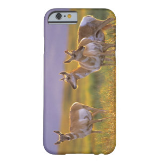 Pronghorn Antelope in Montana Barely There iPhone 6 Case