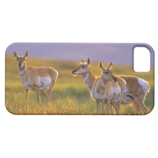 Pronghorn Antelope in Montana iPhone SE/5/5s Case