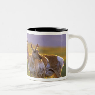 Pronghorn Antelope in Montana Two-Tone Coffee Mug