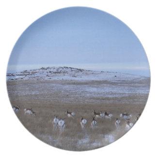Pronghorn Antelope Plates