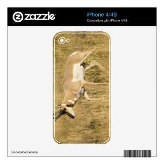 Pronghorn, Antilocapra americana, in a field Decals For iPhone 4