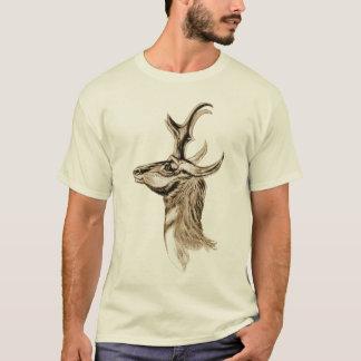 Pronghorn - Antilocapra americana Playera