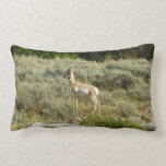 Pronghorn at Grand Teton National Park Lumbar Pillow