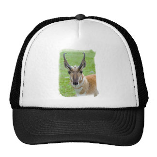 Pronghorn Face Hat