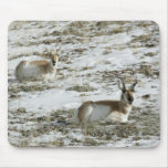 Pronghorn in Snow Mousepad