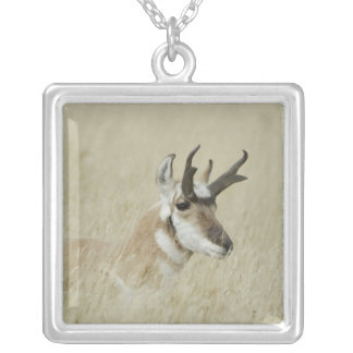 Pronghorn male resting, Yellowstone NP,Wyoming Square Pendant Necklace