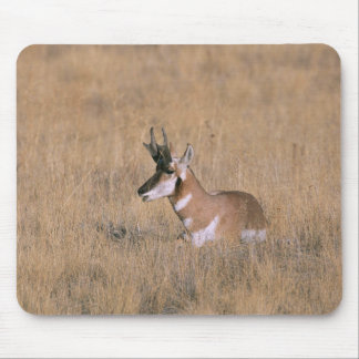 Pronghorn Mouse Pad