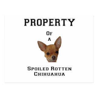 Property of a Spoiled Rotten Chihuahua Postcard