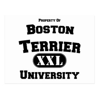 Propiedad de la universidad de Boston Terrier Tarjeta Postal