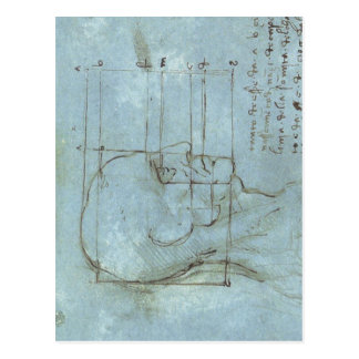 Proportions of the Head 1488 1489 ) is a drawing b Postcard