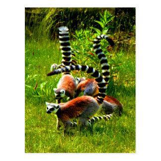 Prosimians atados anillo del lemur de la alegría tarjeta postal