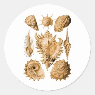 Prosobranchia Classic Round Sticker