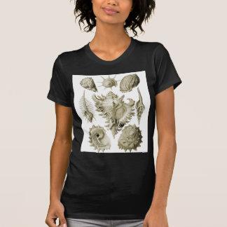 Prosobranchia Shirt