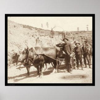 Prospectores con la fiebre SD 1889 del oro Posters