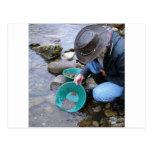 Prospectors Gold Panning Mug Post Card