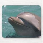 Protagonizar un cojín de ratón del delfín tapete de raton