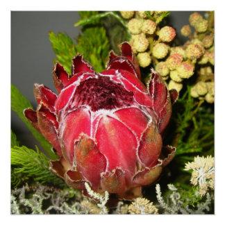 Protea Bouquet Poster