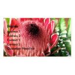 Protea Business Card