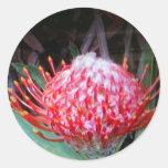 Protea Etiquetas Redondas