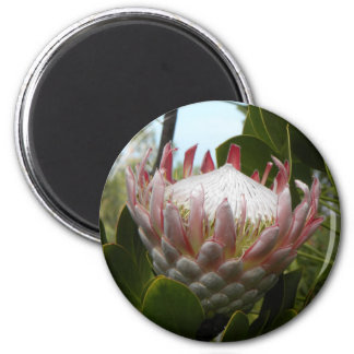 Protea Flower Hawaii Magnet
