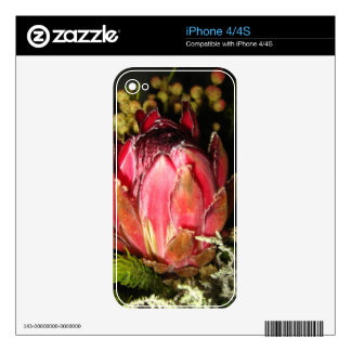 Protea Flower iPhone 4S Decal