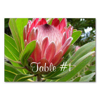 Protea Flowers Card