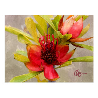 Protea Love Postcard