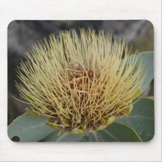 Protea Mouse Pad