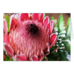 Protea Notecard Stationery Note Card