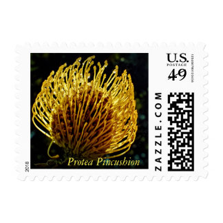 Protea Pincushion flower on a postage stamp.