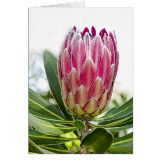 Protea portrait card