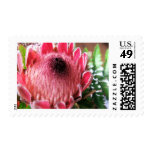 Protea Postage Stamp