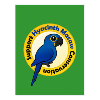 Protección del Macaw del jacinto de la ayuda Tarjetas Postales